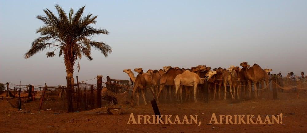 Afrikkaan, Afrikkaan!