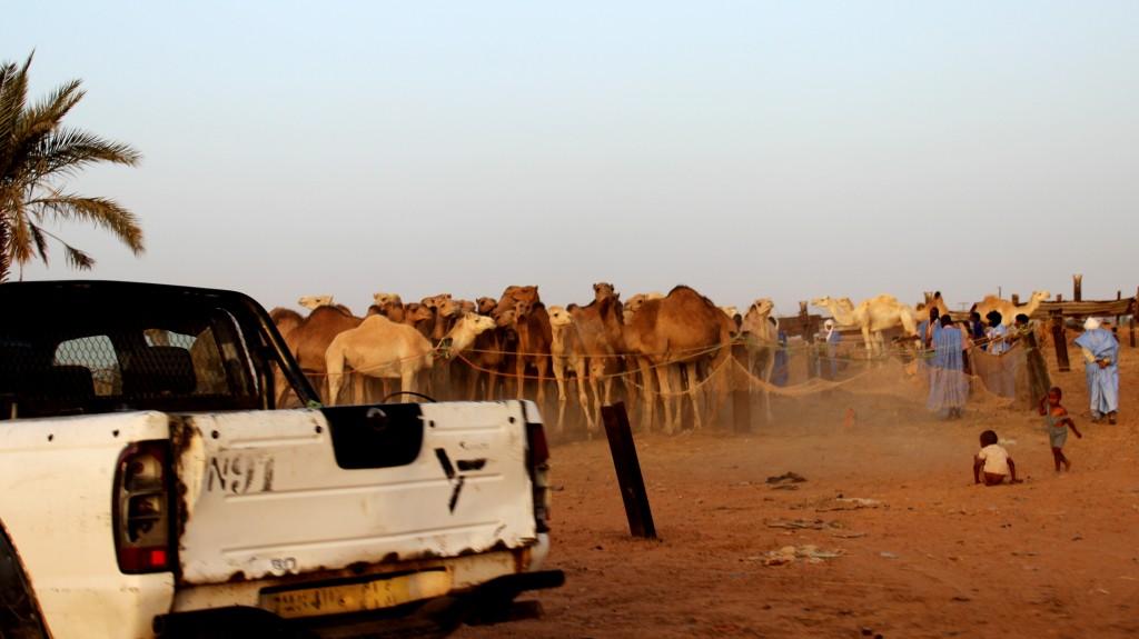 kamelimarkkinat
