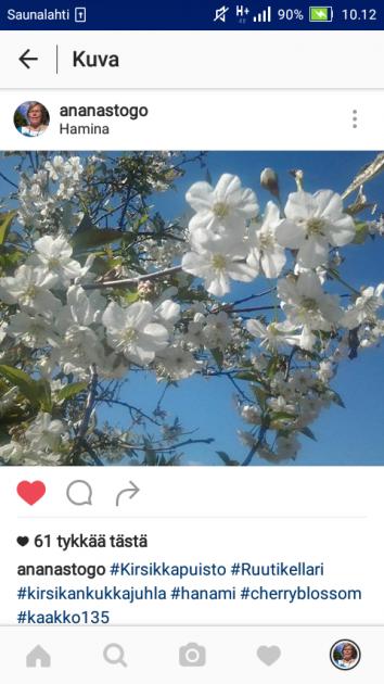 Kirsikkahullun juhlakutinaa voi lievittää läheisessä Haminassakin. Jospa tänä keväänä pääsisin juhliin sinne. Yksi tykätyimmistä kuvista 2016.