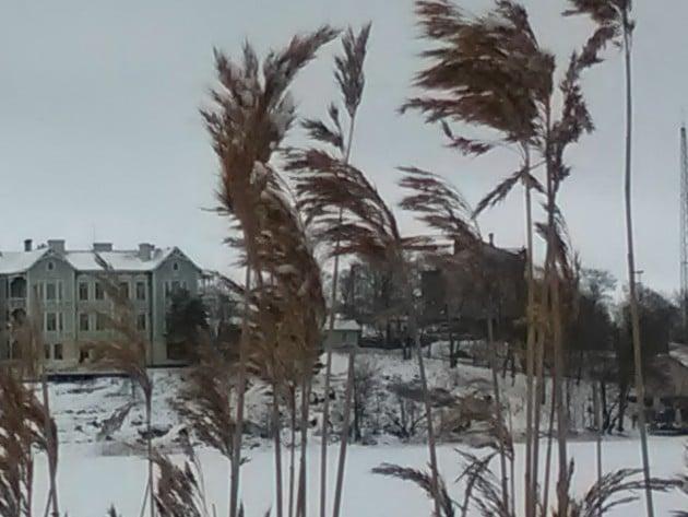 Kkävelyretkellä Töölönlahden reunassa? Ehkäpä polkusi vie tutustumaan Talvipuutarhaan.