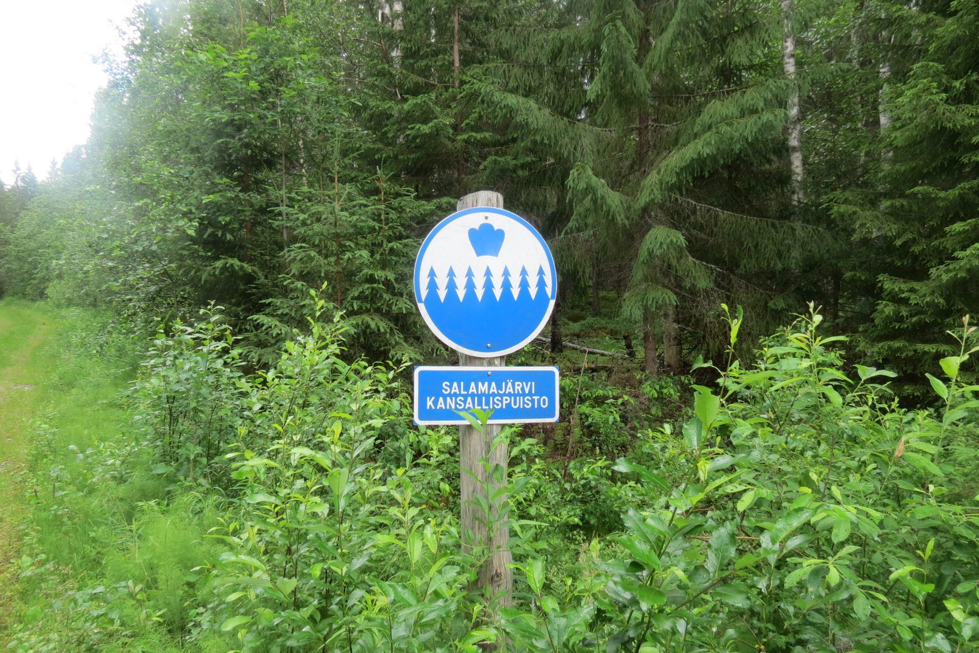 Kohti finaalia II: Salamajärvi ja pyhä puu