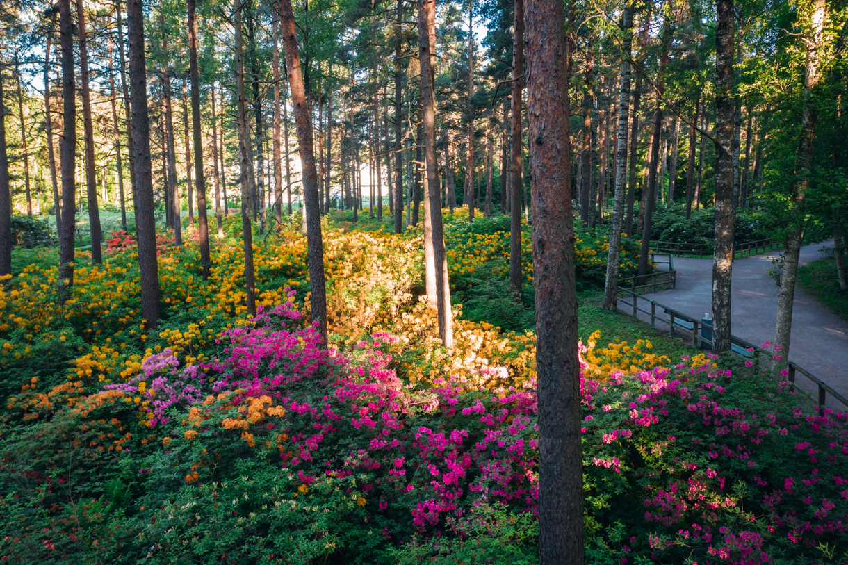 Haagan alppiruusupuisto