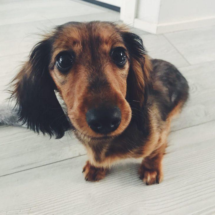 Koiranpentu Luovutusikä