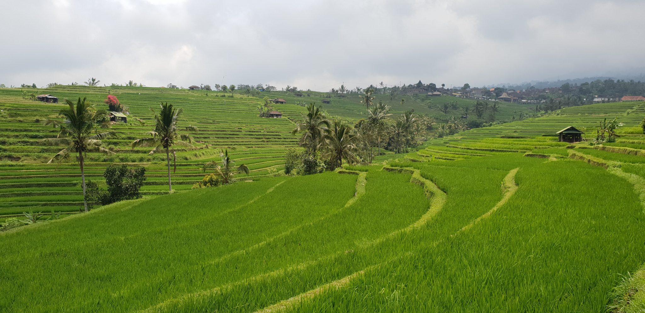 Elämää Balilla