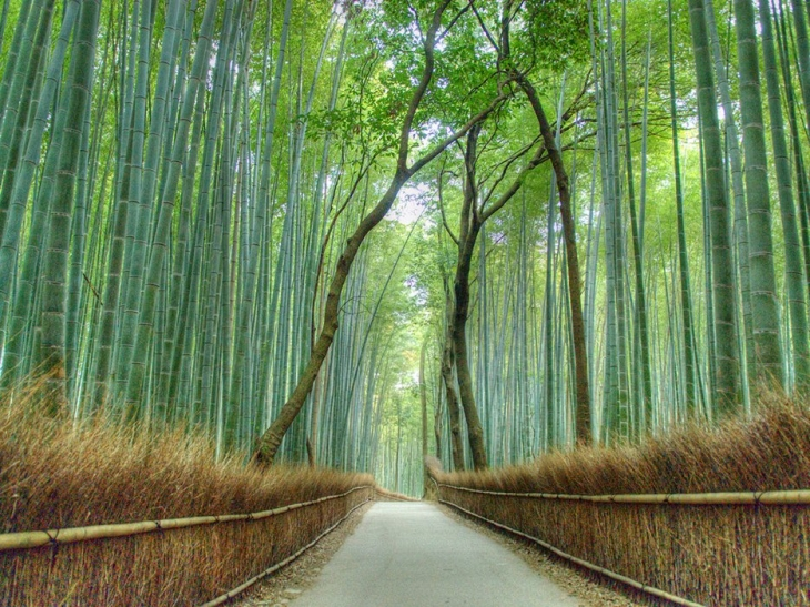 5654e784659c4b4874865e8d_arashiyama-bamboo-forest-kyoto-cr-getty