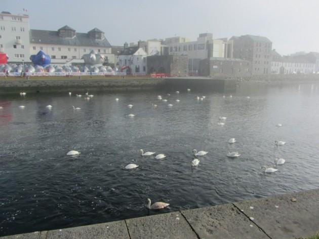 River Corrib ja muutama joutsen