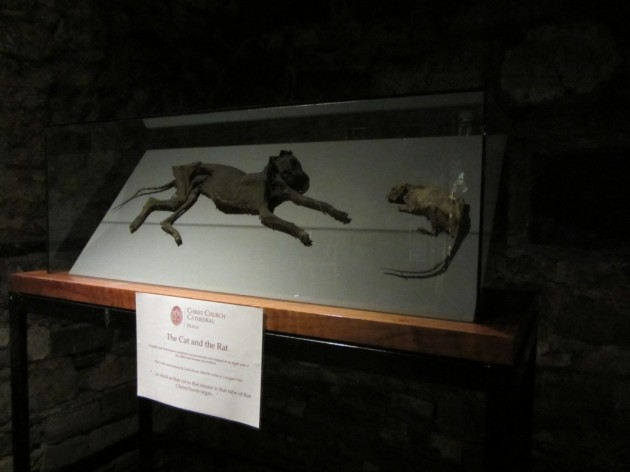 The Cat and the Rat, Christ Church Cathedral