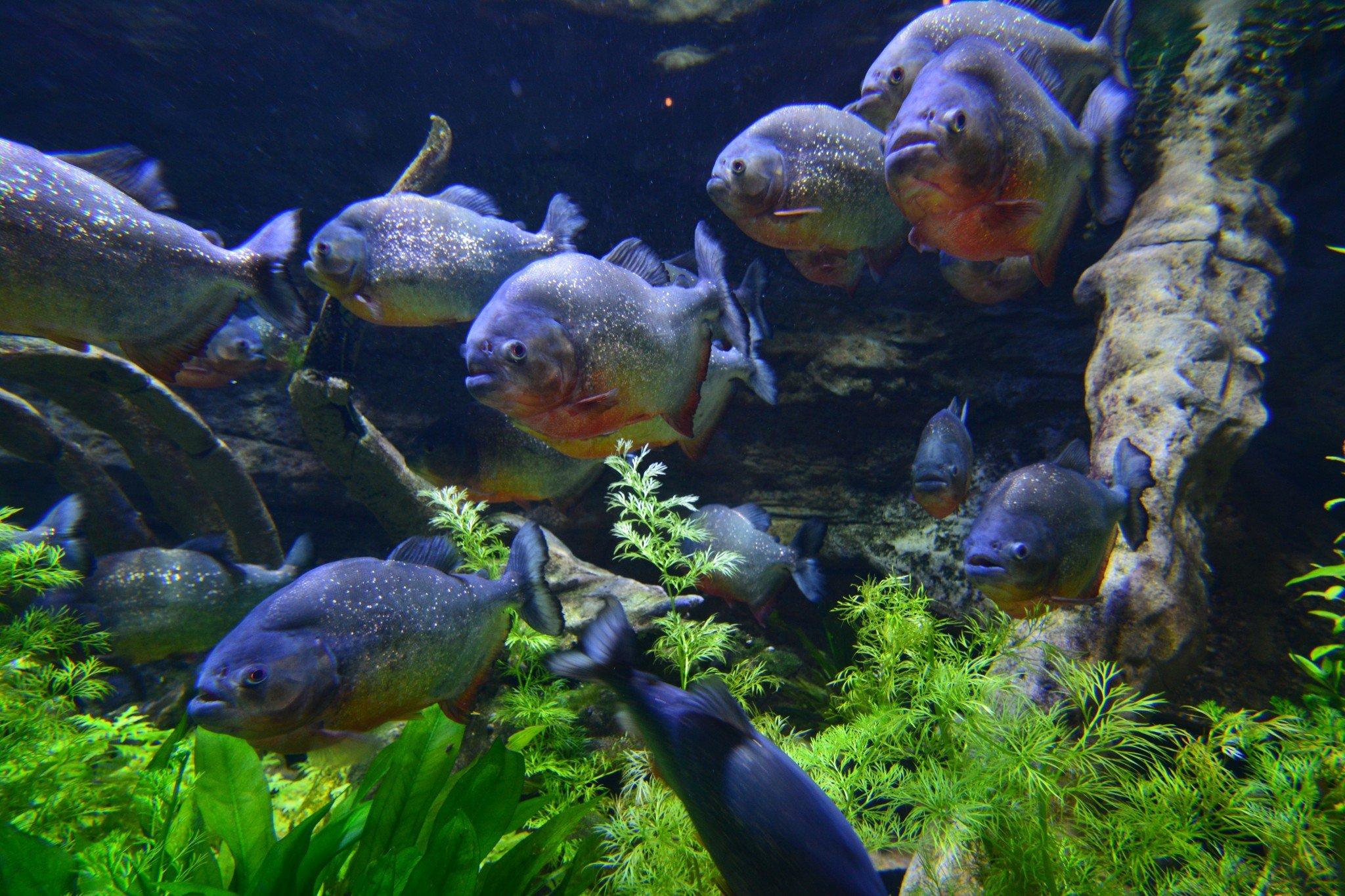 Akvaario 2