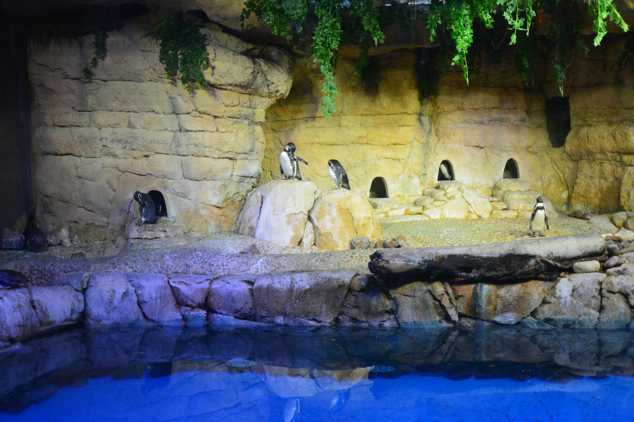 Akvaario 3