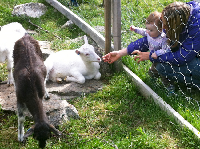 Visiting goat farm in Norway I Destination Unknown I @SatuVW