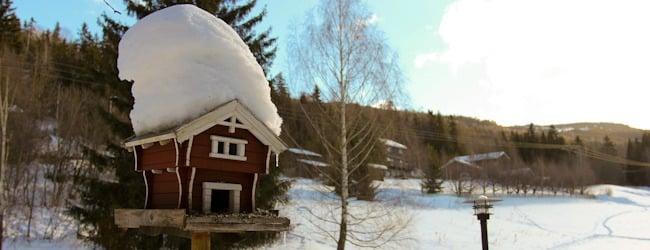 Asunnon etsintä Norjassa I @SatuVW I Destination Unknown