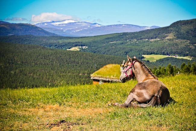 Näkymät Glittertinden-vuorelle Norjassa I @SatuVW I Destination Unknown