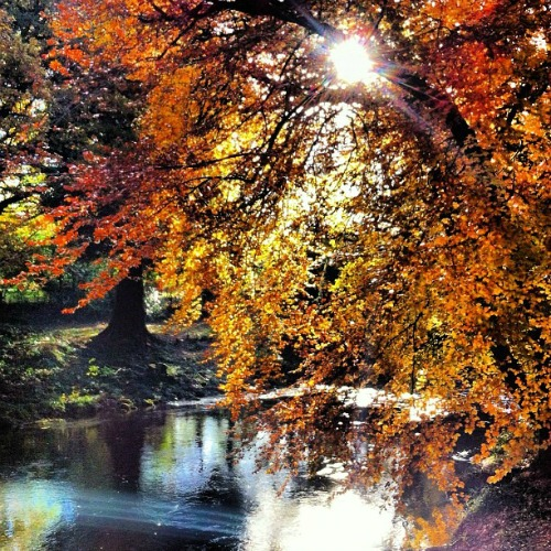 River Dart Country Park, Devon, Englanti via Instagram I @SatuVW I Destination Unknown