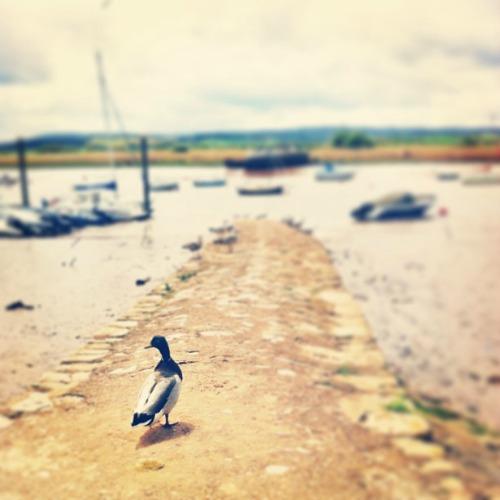 Topshamin joenvartta Devonissa via Instagram I @SatuVW I Destination Unknown
