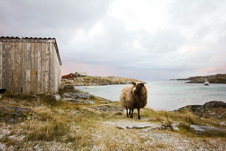 Giværin saari Pohjois-Norjassa I @SatuVW I Destination Unknown