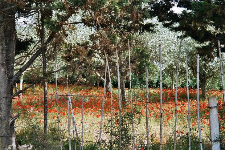 Unikkojen loistoa toukokuisessa Sardiniassa Photo copyright Elämää ja Matkoja