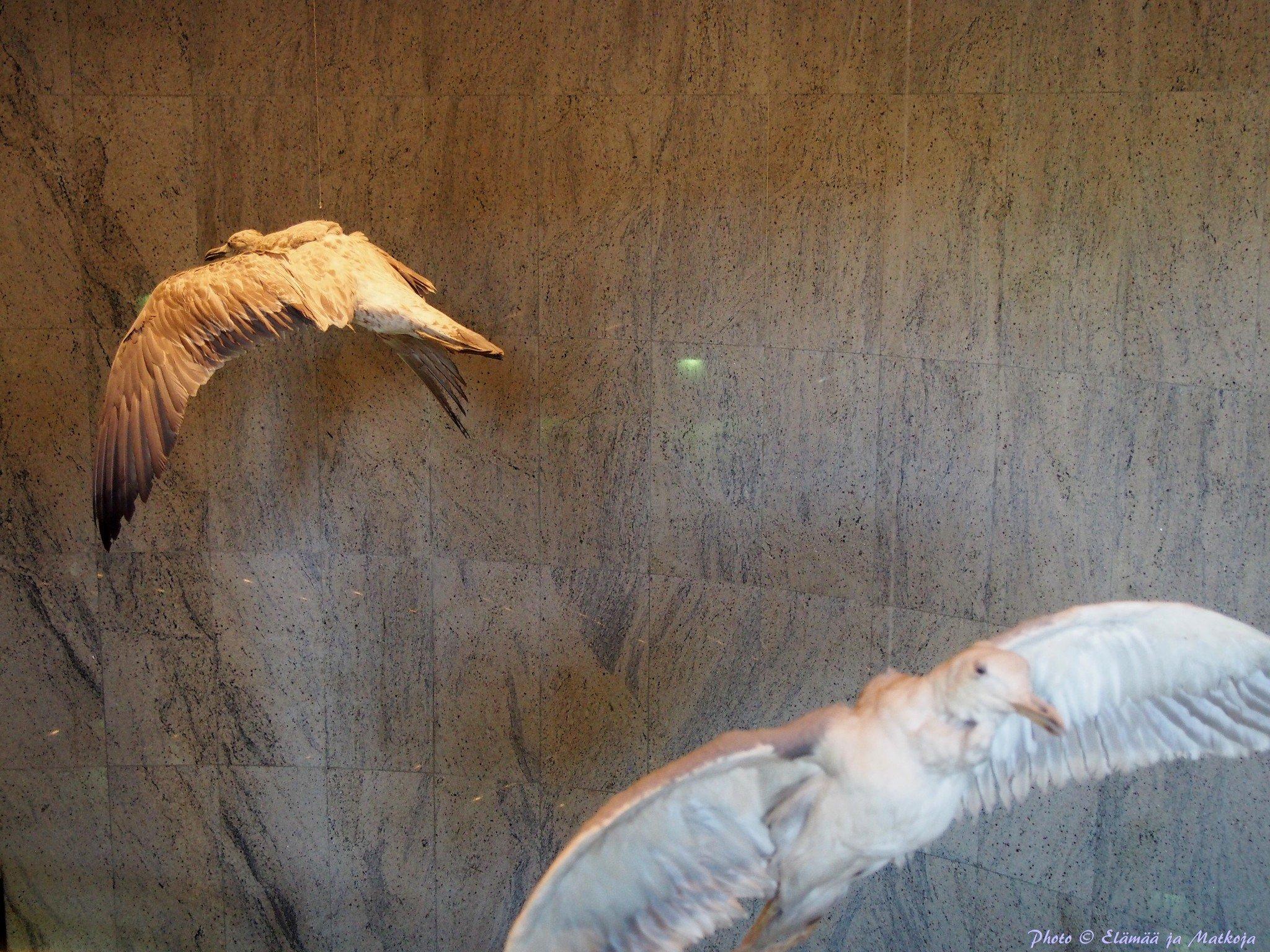Dubai Museum 14 Photo © Elämää ja Matkoja