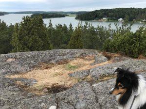 Shetlanninlammaskoira Natte, Ahvenanmaalla Maarianhaminassa näköalapaikalla korkealla kalliolla, Badhusberget