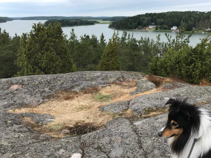Shetlanninlammaskoira Natte, Ahvenanmaalla Maarianhaminassa näköalapaikalla korkealla kalliolla, Badhusberget, Ahvenanmaa saaristokierroksella, nähtävää saaristossa, matkailu
