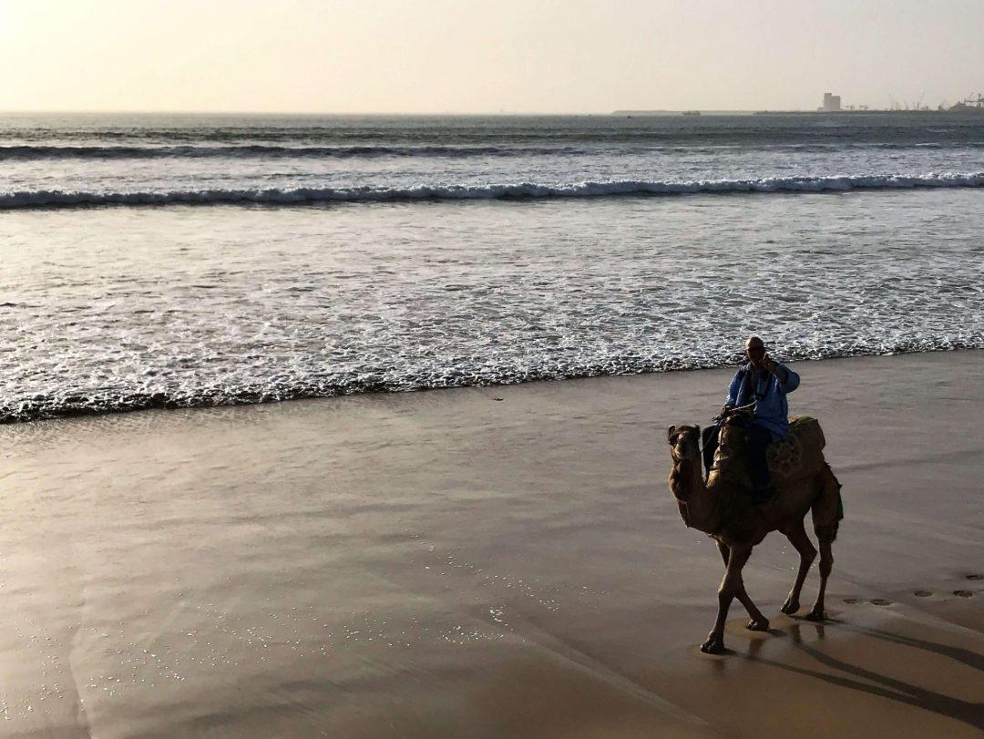 Agadir beach camel
