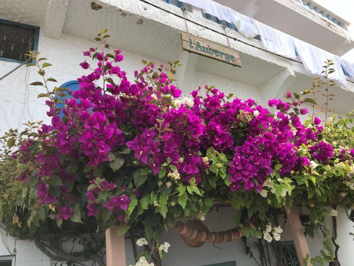 Marokko Agadir nähtävää, Taghazout kalastajakylä, bougainviella kukka, hostelli, retkeilymaja, suffauskeskus, joogaa, ratsastusta, ranta, hotelleja
