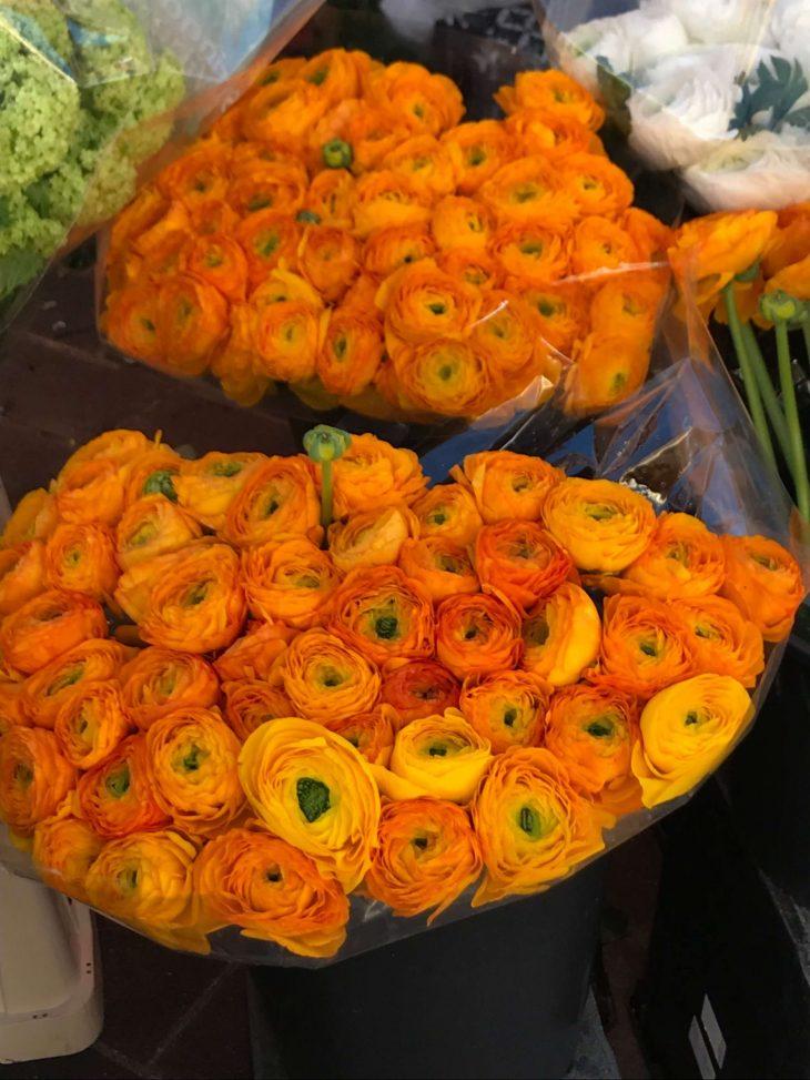 French Riviera, Nice, Flowers in the Nice flower market, Ranskan Riviera Nizza nahtavaa kukkatori vanha kaupunki