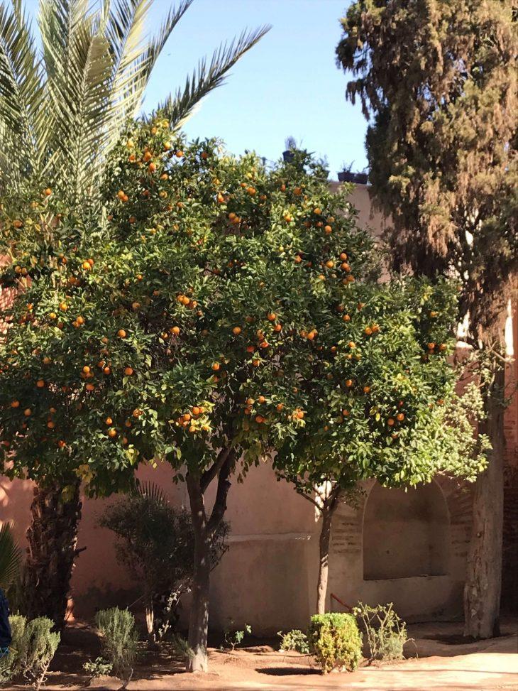 Marokko, Marrakech nähtävää, medina Bahia-palatsin puistoa, kokemukia vanha kaupunki