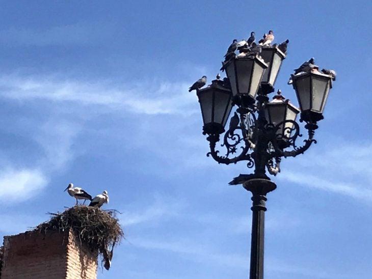 Lintuja portin päällä, Marokko Marrakech nahtavaa medinan portti, kokemukia vanha kaupunki