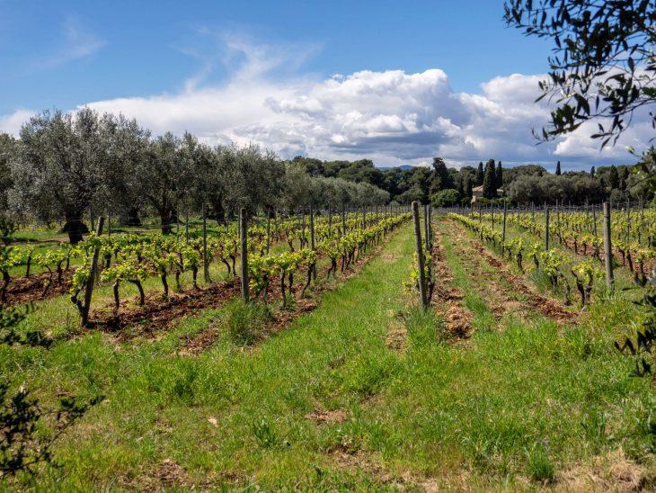 Luonnonkaunis Saint-Honorat saari Cannesin edustalla, viiniviljelmät ja viininmaistajaiset Ranskan Riviera kokemuksia