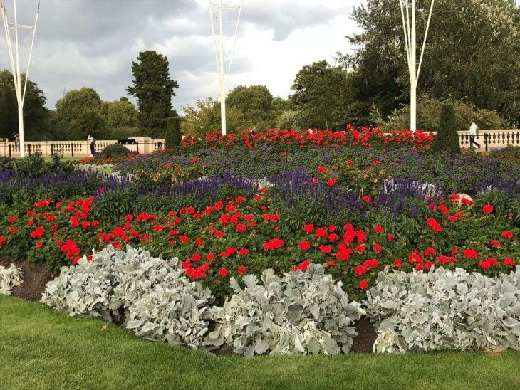 Lontoo ilmaisia nähtävyyksiä ja koettavaa - Buckingham Palacen puutarhan istutuksia
