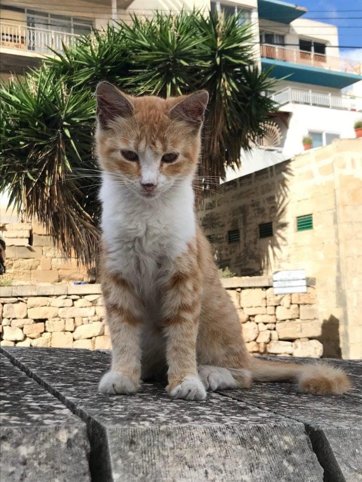 Kissa Maltan asunnon ulkopuolella, Airbnb Xemxija