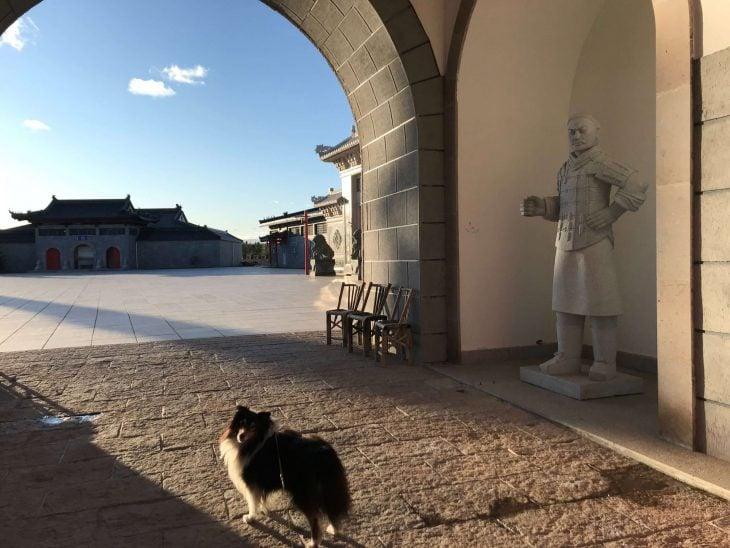 Åre nähtävää ja koettavaa, laskettelu Ruotsi, koiran kanssa