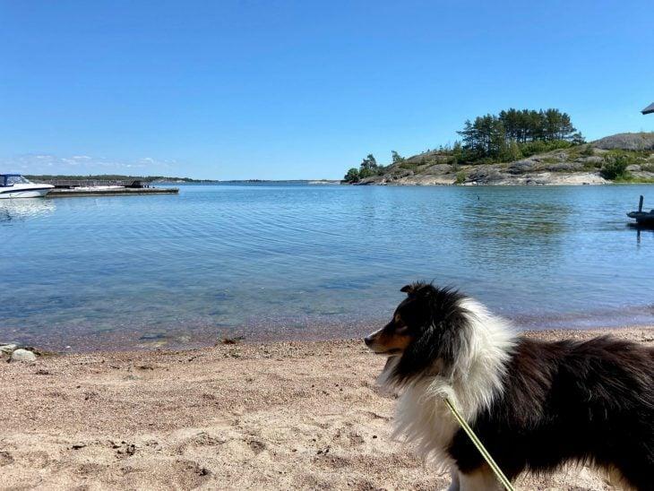 Ahvenanmaan saaristoon saaristolautta Kustavista, majoitus mökki saaristossa, Pellas, Lappo, vierassatama uimaranta