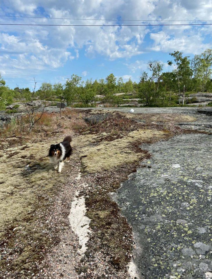 Ahvenanmaan saaristoon saaristolautta Kustavista, majoitus mökki saaristossa, Pellas, Lappo, vierassatama saaristotunnelmaa, vaellusreitit