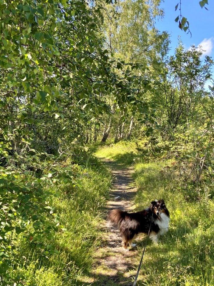 Luontopolut, Svedjehamn Björkö, Raippaluoto Mustasaari Merenkurkun saaristo vaellus