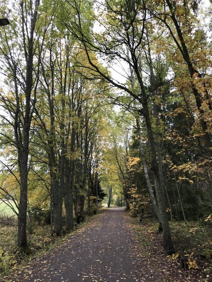 Katariinanlaakso luontopolku Turku luontokohde