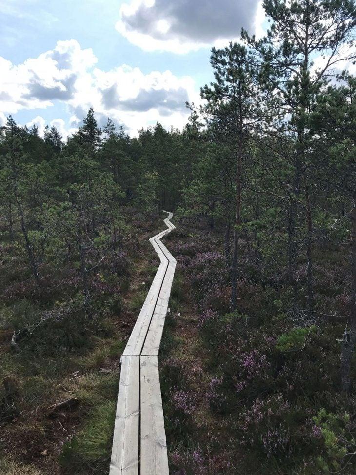 Kurjenrahkan kansallispuisto luontopolku Turun lähellä luontokohde