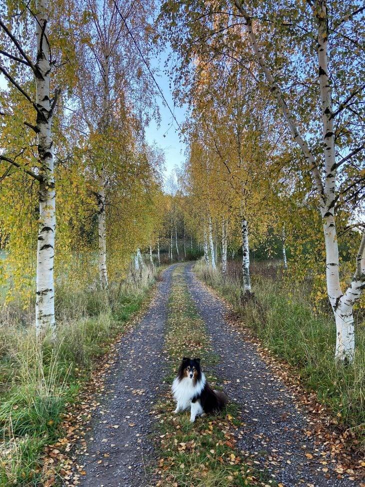 Naantali Luolajanjärvi luontopolku koiran kanssa luontokohteet Turun ympäristö