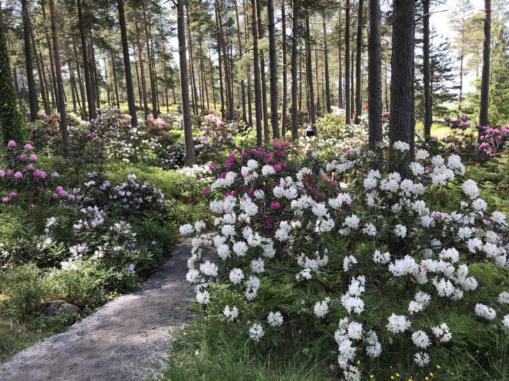 Raisio Alppiruusupuisto luontopolku Turun lähellä luontokohde