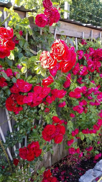 Visby on ruusujen kaupunki