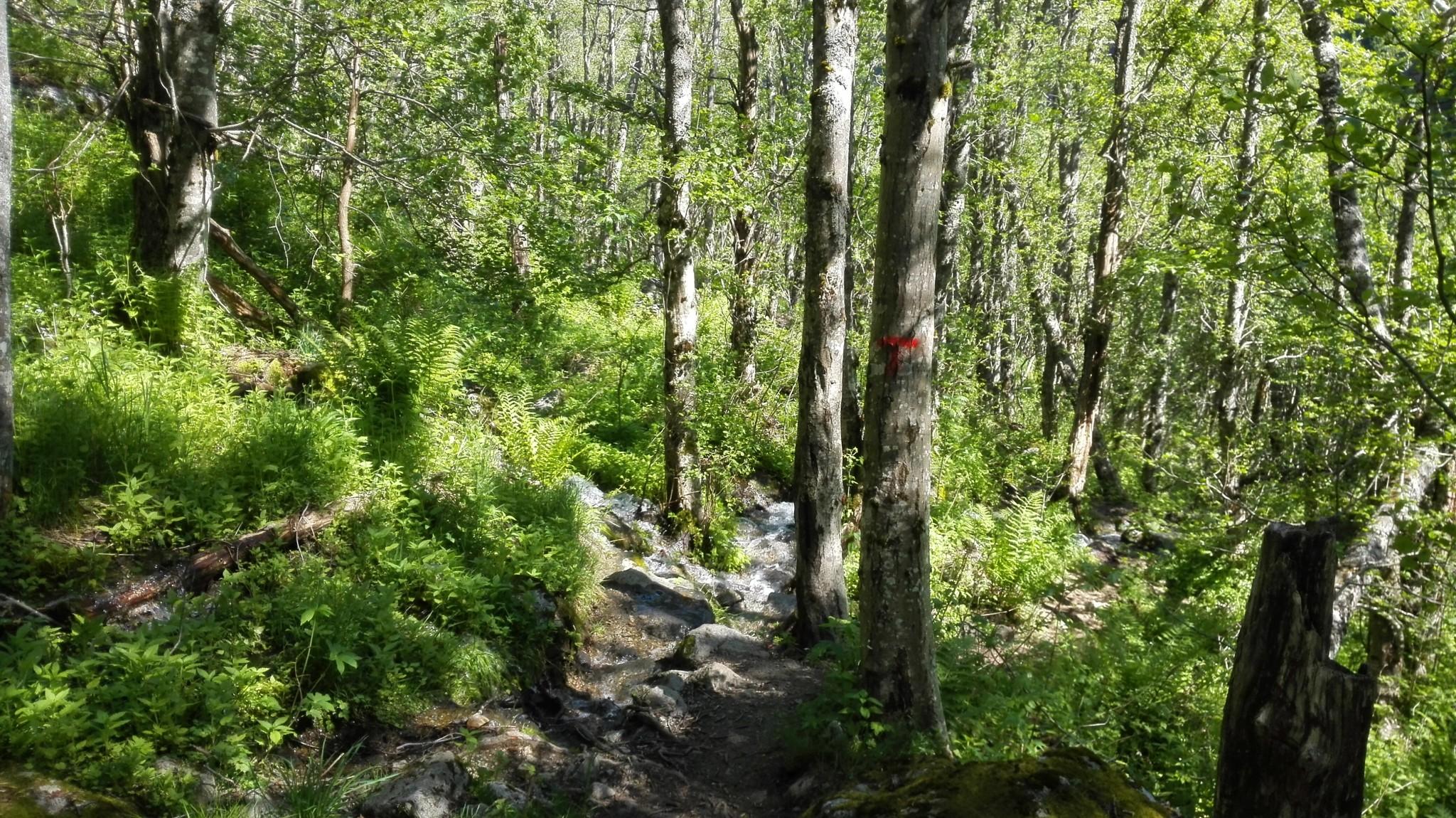 Alku on vehreän metsäinen