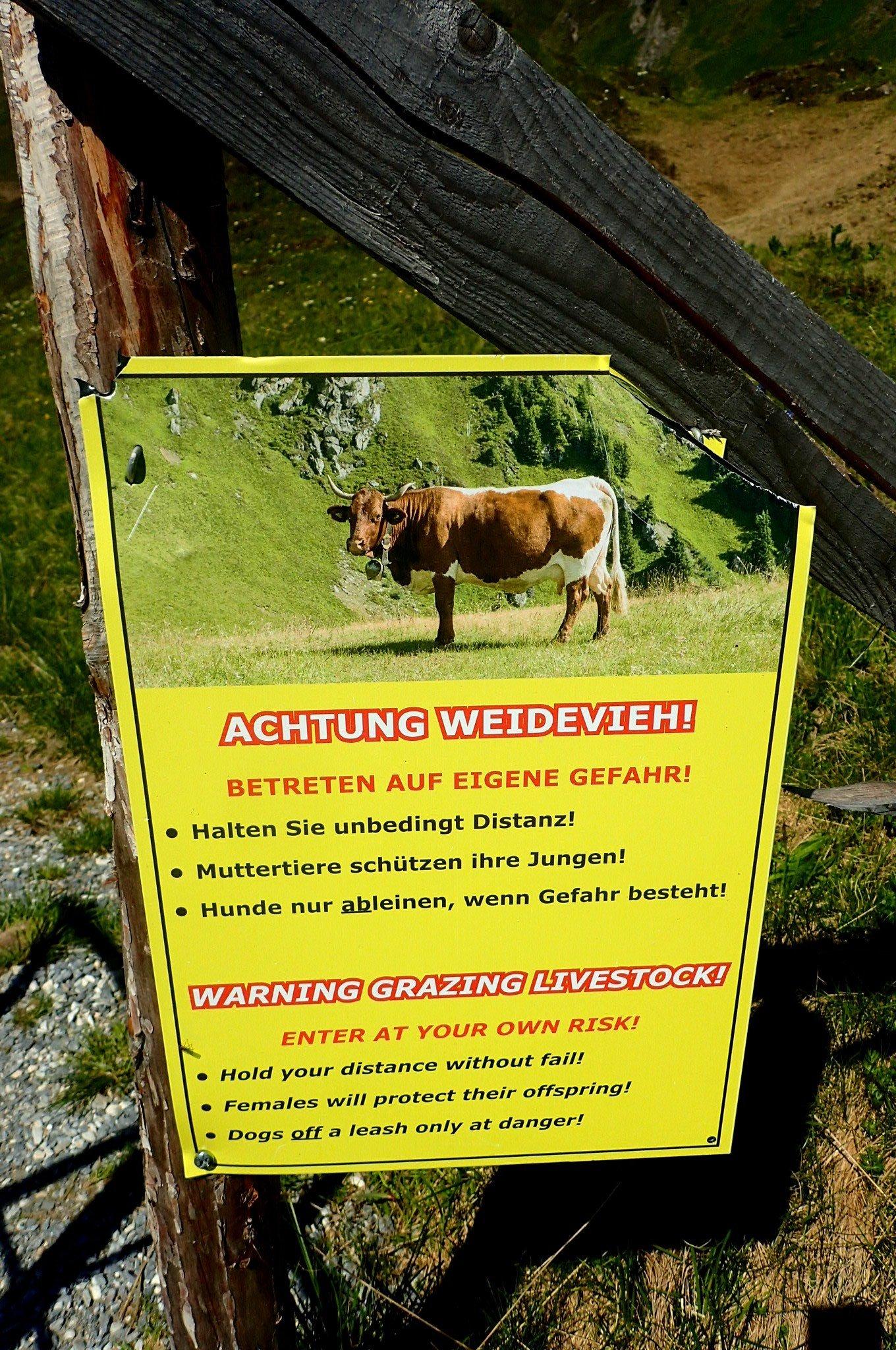 """Polku kulkee paikoitellen lehmien laidunalueilla, joilla varoitellaan """"hulluista lehmistä"""""""