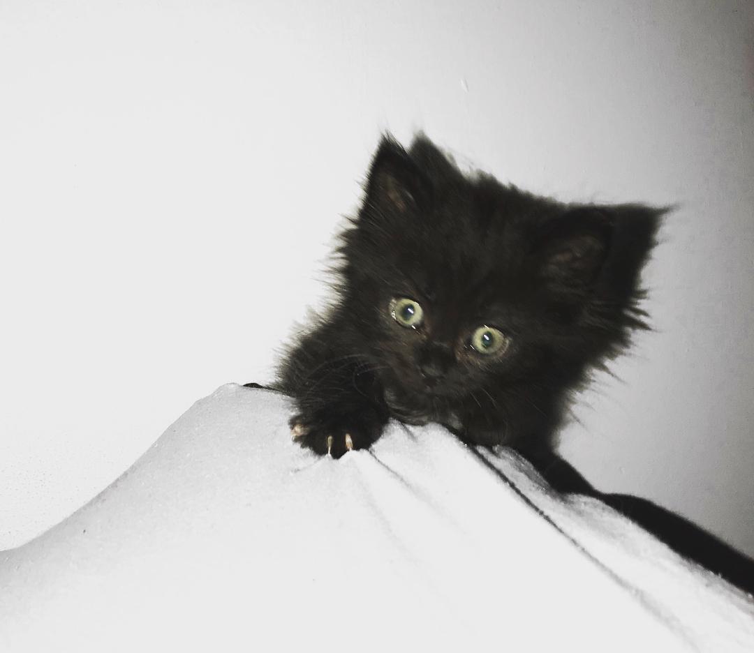 This little rascal is Sirius Hes pretty cute Ok VERYhellip