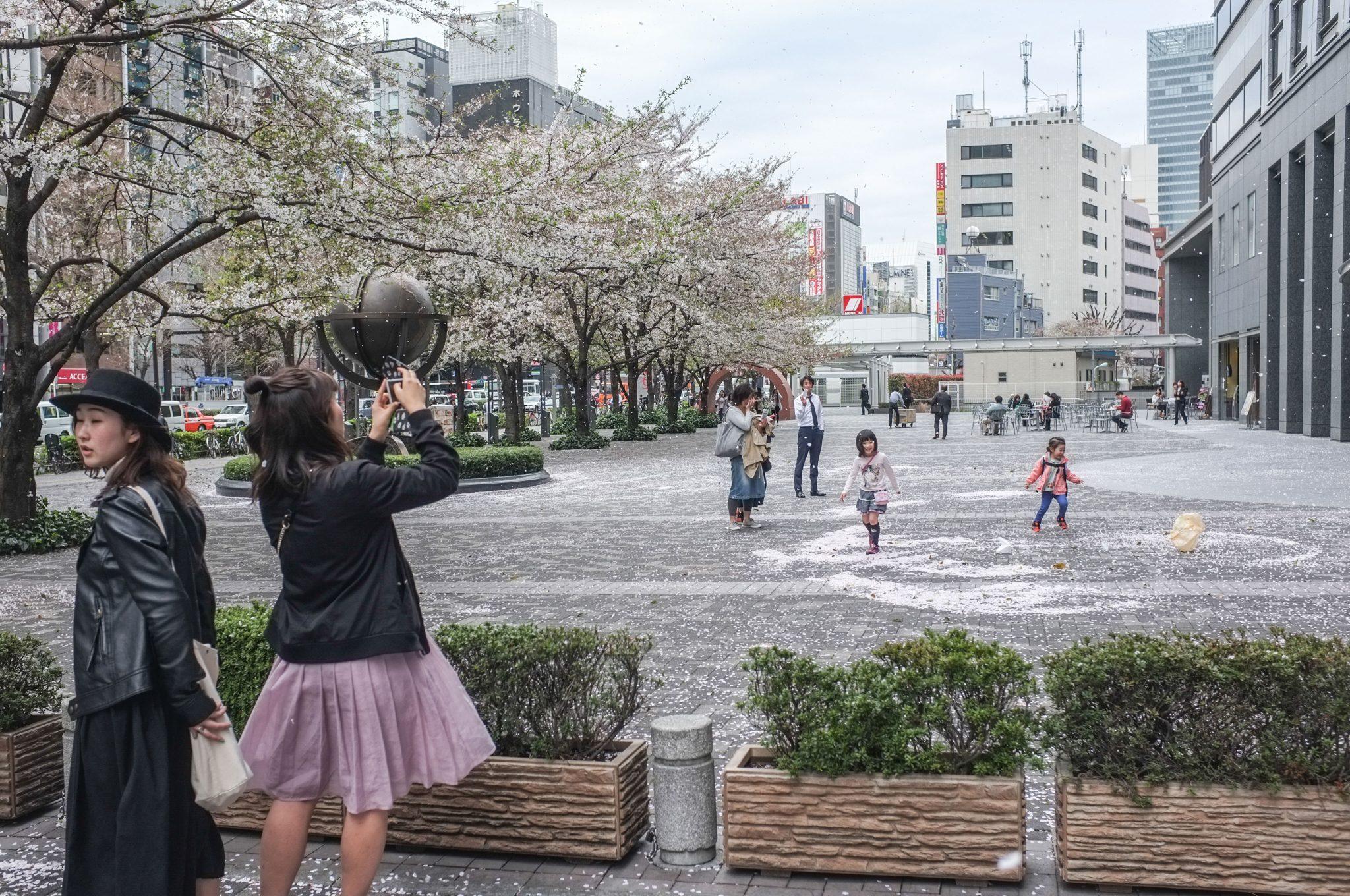 Japanilainen katumaisema ja ihmisiä kirsikankukkien putoamisen aikaan