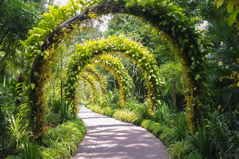 polku puutarhassa, jonka ympäri menee köynnöksiä