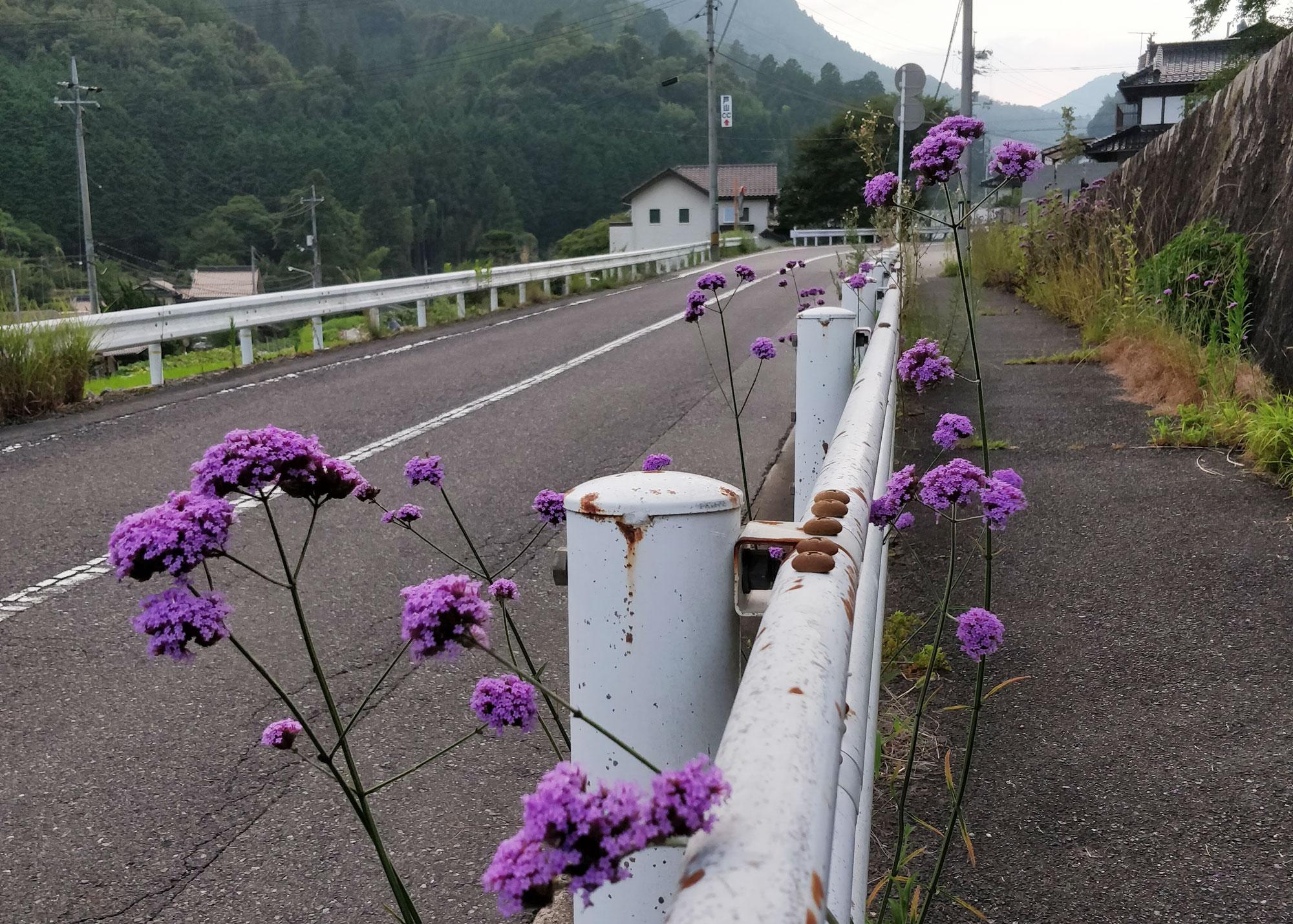 kukkia jalkakäytävän vieressä japanin maaseudulla