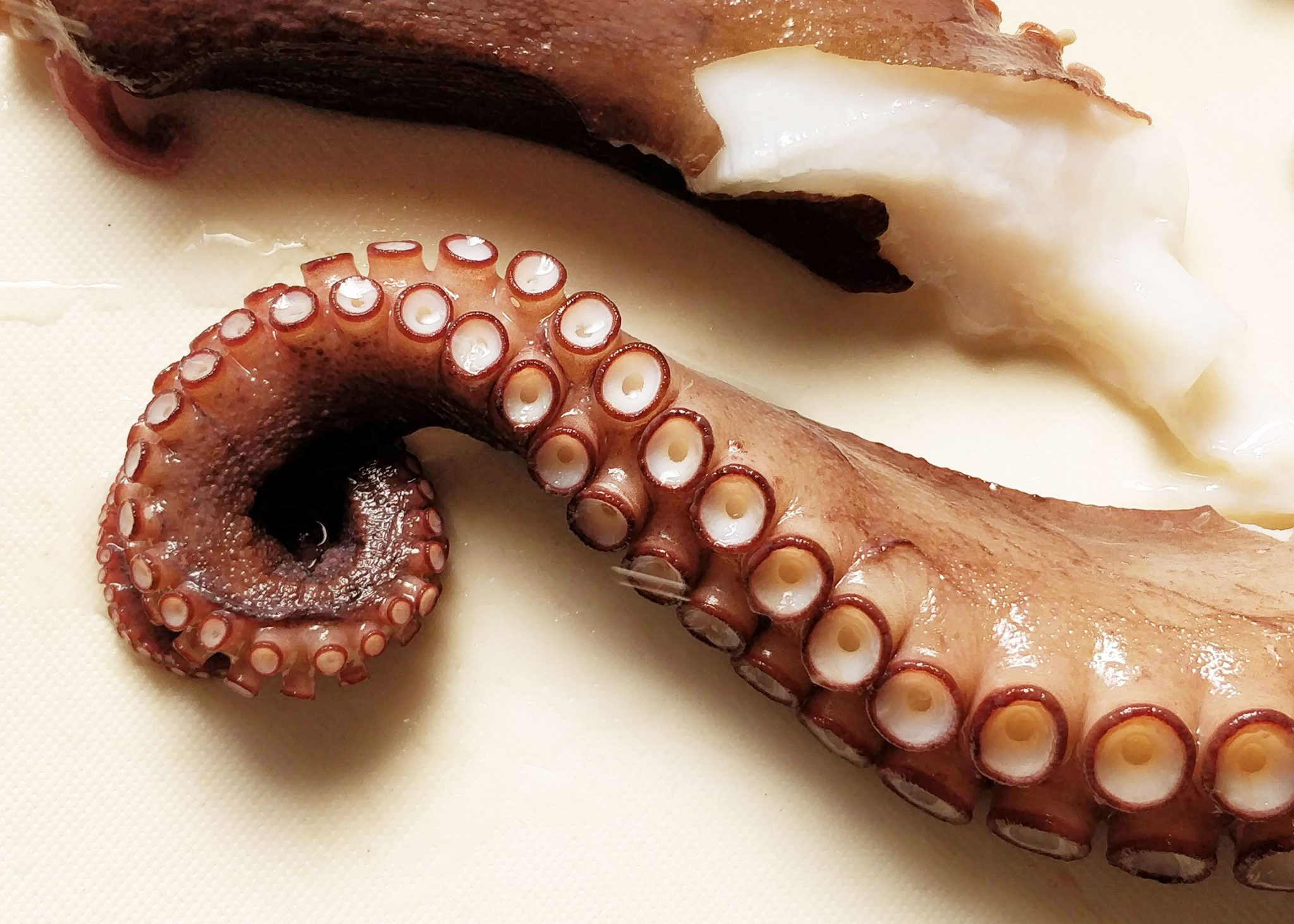 Mustekalan lonkeroita leikkuulaudalla