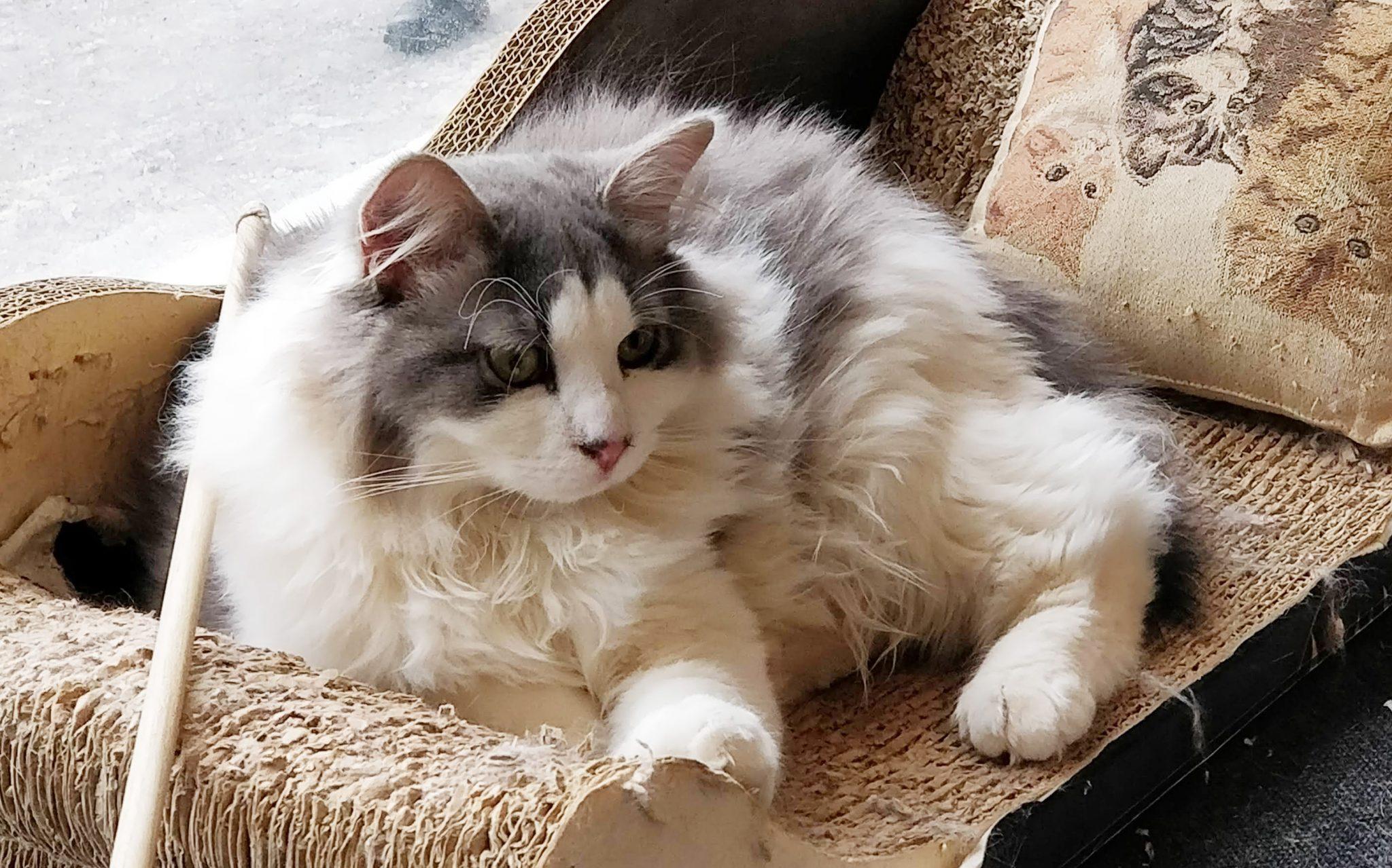kissakahvila nurrin kissa