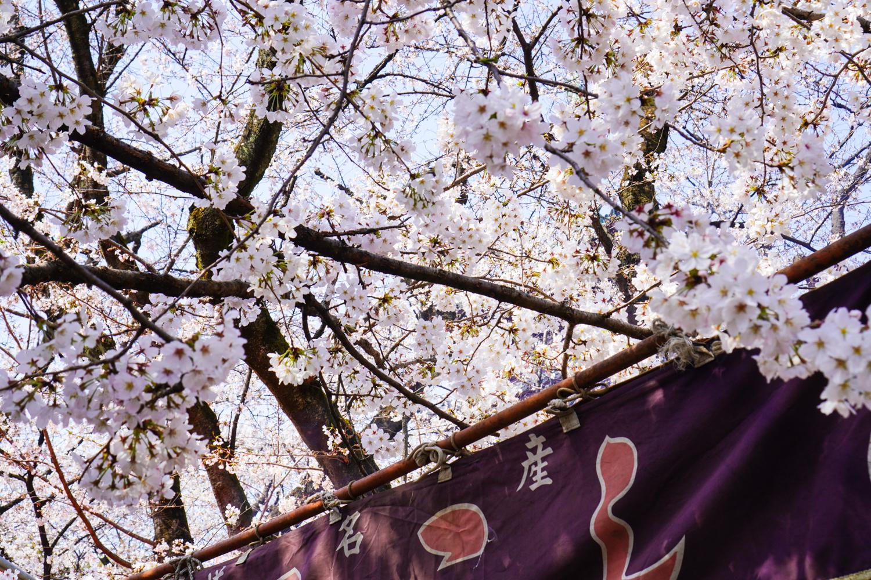 kirsikankukan oksia kojun kyltin päällä