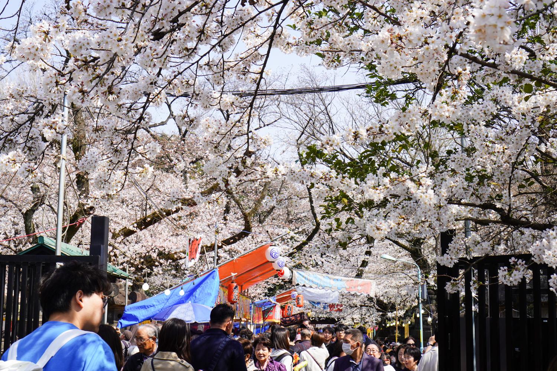 uenon puiston kirsikankukkia ja ruokakojuja